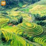 WONDERFUL-SAPA-TERRACED-FIELDS-072